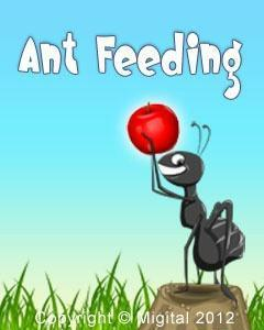 Ant Feeding Free