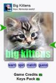 Big Cats by Keys