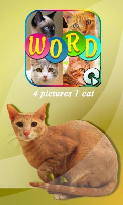 4 pics 1 cat