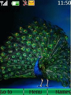Animated Peacock