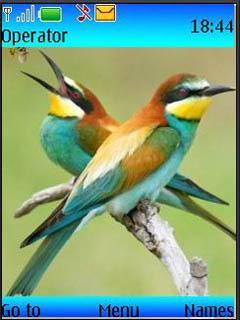 Colorid Birds