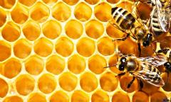 Honeycomb HD wallpapers
