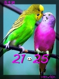 love birds by utsav
