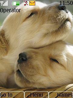 M217 - Cute Puppies