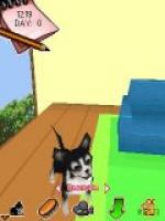 My Little Dogs 3d